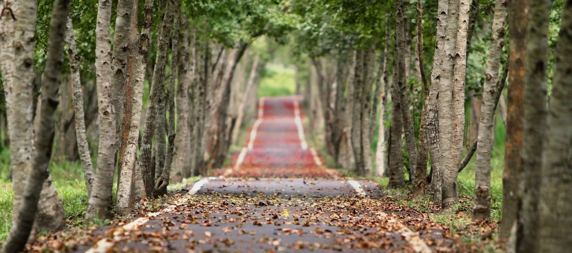 cropped-woodland-656969_1280.jpg